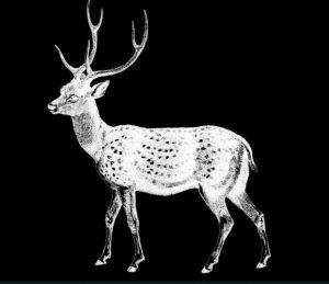 vimeo-deer-wedding
